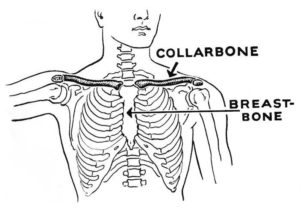 collarbone illustration
